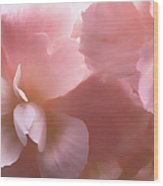 Pink Begonia Floral Wood Print