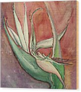 Pink Bird Of Paradise Wood Print by Anais DelaVega