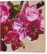 Bee Flying Pink Blossoms 031015a Wood Print