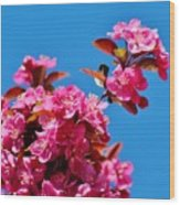 Pink Blossoms Blue Sky 031015a Wood Print