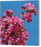 Pink Blossoms Blue Sky 031015aa Wood Print