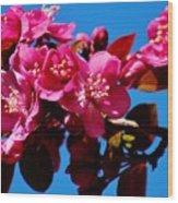 Pink Blossoms Closeup 031015a Wood Print