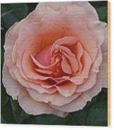 Pink Blush Rose I Wood Print