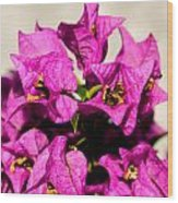 Pink Bougainvillea Classical Wood Print