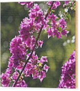 Pink Bougainvillea Sunshine Wood Print