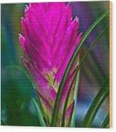 Pink Bromelaid Flower Wood Print