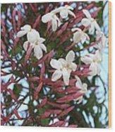 Pink Buds And Jasmine Blossom Close Up Wood Print