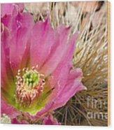 Pink Cactus Flower Wood Print