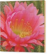 Pink Cactus Flower Of The Southwest Wood Print