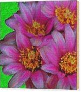 Pink Cactus Flowers Wood Print