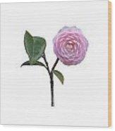 Pink Camellia On White Wood Print
