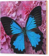 Pink Camilla And Blue Butterfly Wood Print