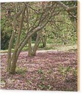 Pink Carpet In The Forrest Wood Print