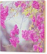 Pink Cascade Of Bougainvillea Wood Print