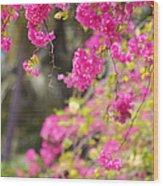 Pink Cascade Of Bougainvillea. Vertical Wood Print