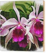 Pink Cattleya Cluster Wood Print