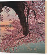 Pink Cherry Blossom Sunrise Wood Print by Metro DC Photography