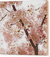 Pink Cherry Blossoms - Impressions Of Spring Wood Print