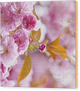 Pink Cherry Blossoms In Spring Orchard Wood Print by Elena Elisseeva