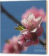 Pink Cherry Tree Blossom Wood Print