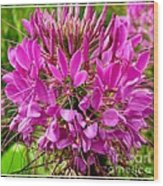 Pink Cleome Flower Wood Print