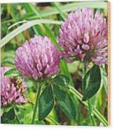 Pink Clover Wildflower - Trifolium Pratense Wood Print