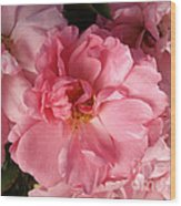 Pink Cluster Wood Print