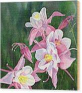 Pink Columbine Blossoms Wood Print