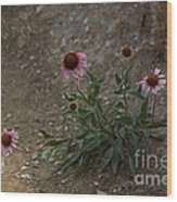 Pink Cone Flower's Close Up In A Road Wood Print