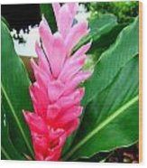 Pink Cone Ginger Wood Print