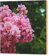 Pink Contrast Wood Print