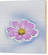 Pink Cosmos Flower Floating On Water Wood Print