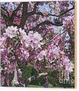 Pink Crabapple Wood Print