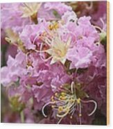 Pink Crepe Myrtle Closeup Wood Print