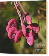 Pink Curls - Flower Macro Wood Print