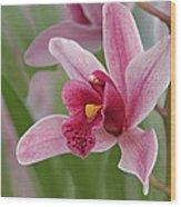 Pink Cymbidium Orchid Wood Print