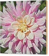 Pink Dahlia Flower Wood Print