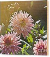 Pink Dahlia Garden Wood Print