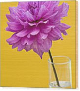 Pink Dahlia In A Vase Against Yellow Orange Background Wood Print by Natalie Kinnear