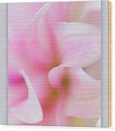 Pink Dahlia Petals Wood Print