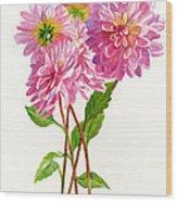 Pink Dahlias Wood Print by Sharon Freeman