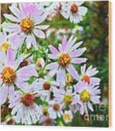 Pink Daisies Flowers Wood Print