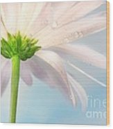 Pink Daisy Wood Print by Sandra Cunningham