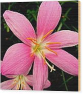Pink Day Lily Wood Print