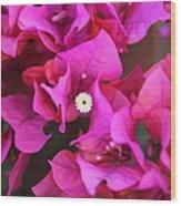 Pink Del Rio Wood Print