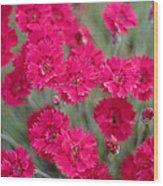 Pink Dianthus Flowers Wood Print