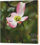 Pink Dogwood 2 Wood Print