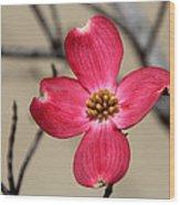 Pink Dogwood 5 Wood Print