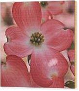 Pink Dogwood At Easter 2 Wood Print