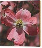 Pink Dogwood At Easter 3 Wood Print